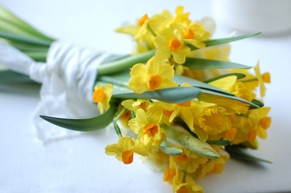 Tặng quà sinh nhật hoa thủy tiên vàng